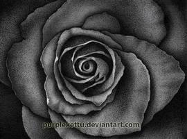 Rose by PurpleKettu