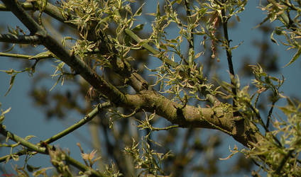 Branches by Gimper43