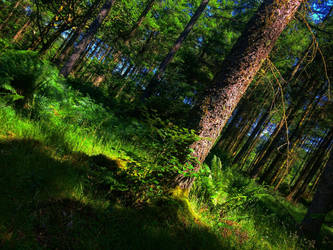 Fairytale Wood by TheNatureSpot