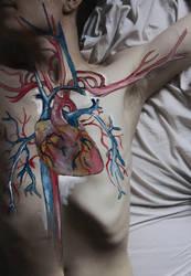 Anatomy by KiraTakuto