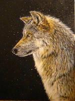 Winter Wolf by DanBurgessTheArtist