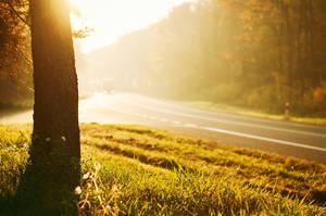 Morning Light by B-Tek