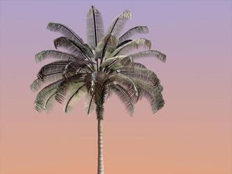 palm tree by palnkton