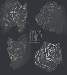 Big felines  practice by Kelshray