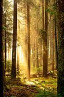 morning light by Blickfanq
