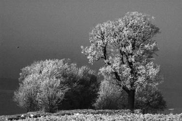 Snow Tree III by graemeskinner