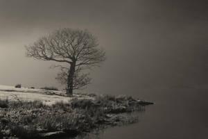 Tree by Crummock by graemeskinner
