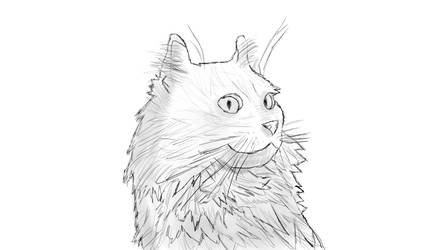 Sketch - My cat shorty by andreb1996