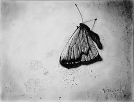 le papillon by Papkalaci