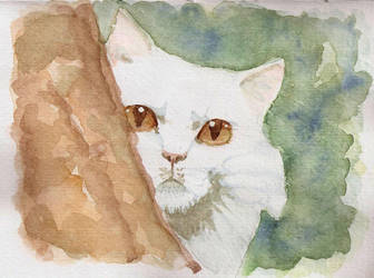 White cat by ypnogatis