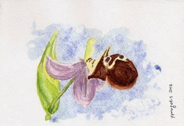 Cretan orchid postcard by ypnogatis