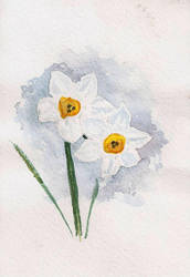 blooming daffodils postcard by ypnogatis