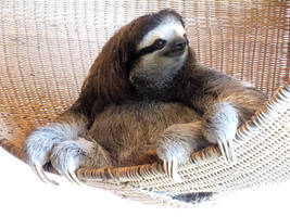 Oldest Sloth by bringitonlex