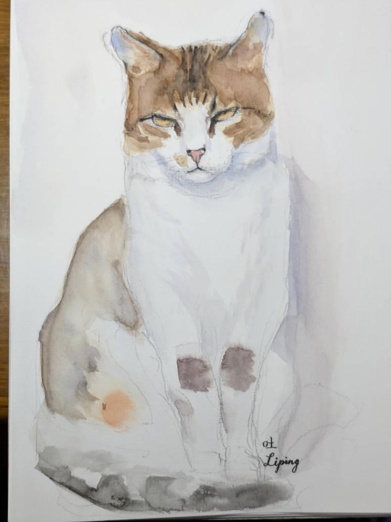A Serious Cat by jiangshan0515