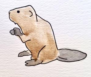 Beaver sketch by Edelslav