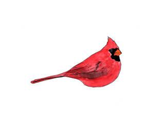 Cardinal Watercolor by Edelslav