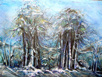 Snowy forest by TriciaS