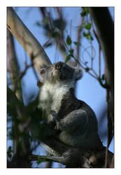 Happy Sunbath for a Koala by atl2000