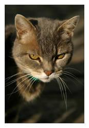 a Feline lOOk by atl2000