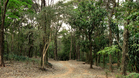 path through jungle by ffulanoo