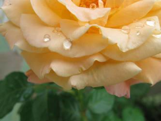 raindrops by ffulanoo