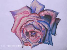 Rose II by kaldengel