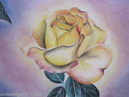 The first rose of the day by kaldengel