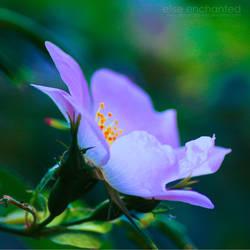Night flower by EliseEnchanted
