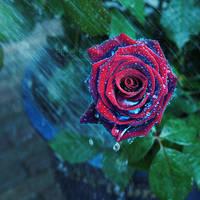 Raining magic by EliseEnchanted