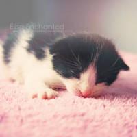 Sleepy by EliseEnchanted
