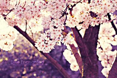 Sakura by EliseEnchanted