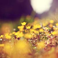 Yellow by EliseEnchanted