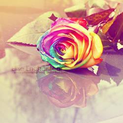 Rainbow Rose by EliseEnchanted