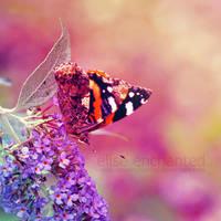 Wings by EliseEnchanted