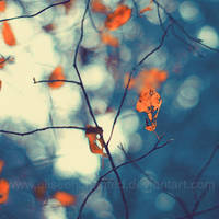 Fragile autumn by EliseEnchanted