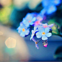 Colorful spring by EliseEnchanted