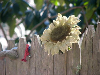 Fence Flower by CrystalCannibalxCore