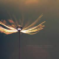 the.light.in.the.dark by JeanFan