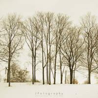Snowpocalypse 2011 by JeanFan