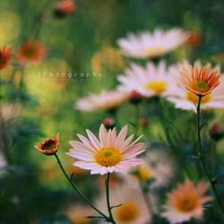 flower of the seasons by JeanFan