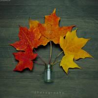 Color Capture by JeanFan