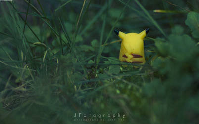 In the tall grass by JeanFan