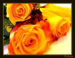 Roses by KalinaSto