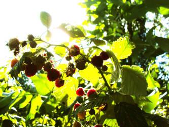 Rapsberries Swing by CastleBurh