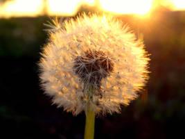 Wish Maker by CastleBurh