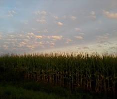 Sky by Rayno6