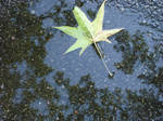 Leaf in puddle by greyrowan