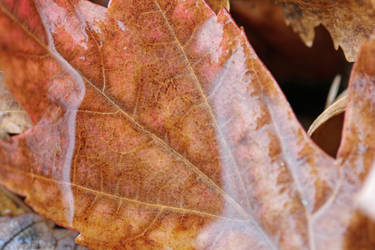 Leaf magnified by water 1 by greyrowan