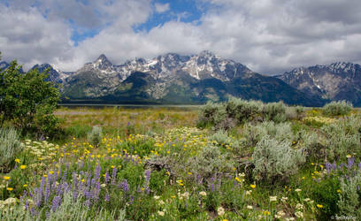 Teton Wildflower Vista by TerribleTer