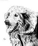 Dog Portrait (Willie - Ink) by KeithMeyerArt